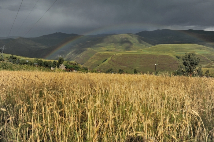 Dry winter spells bad news for Lesotho's farmers