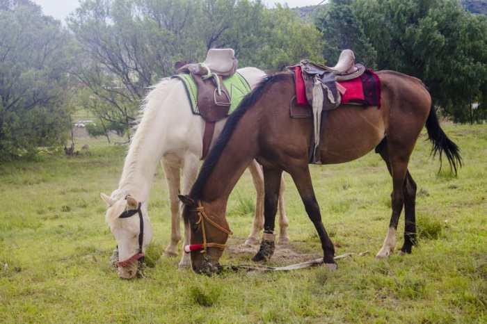 Horse ||